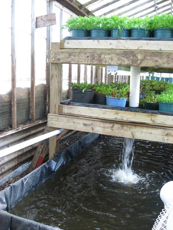 Home Aquaponics Building An Endless Food Supply