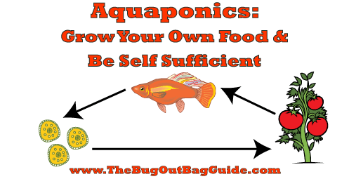 Home Aquaponics: Building An Endless Food Supply on home construction plans, home garden plans, home energy plans, home gardening plans, home architecture plans, home wheelchair scale less then 1000, home hydroponics plans, homemade hydroponics plans, home aquaculture systems, home landscaping plans, home solar plans, home aquaponic gardening, fish tank plans, home greenhouse plans, aquaponic basic plans,