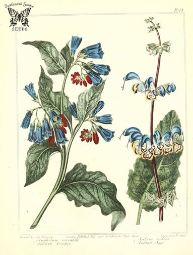 herbal medicine foraging