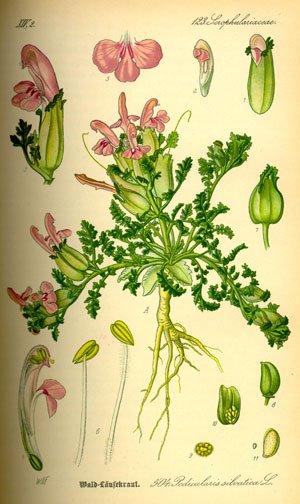 herbal medicine chest
